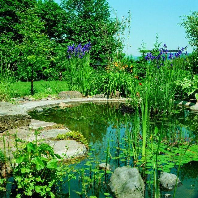 какие бываю пруды для дачи, как сделать на даче пруд, бассейн на даче, дачный пруд бассейн,