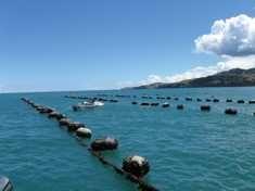 Coromandel mussel production. http://www.coromandelaquaculture.co.nz/aquaculture-story.html