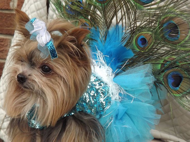 Peacock Outfit Furry Friends Pinterest Beautiful