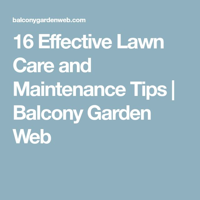 16 Effective Lawn Care and Maintenance Tips | Balcony Garden Web
