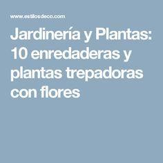 Jardinería y Plantas: 10 enredaderas y plantas trepadoras con flores