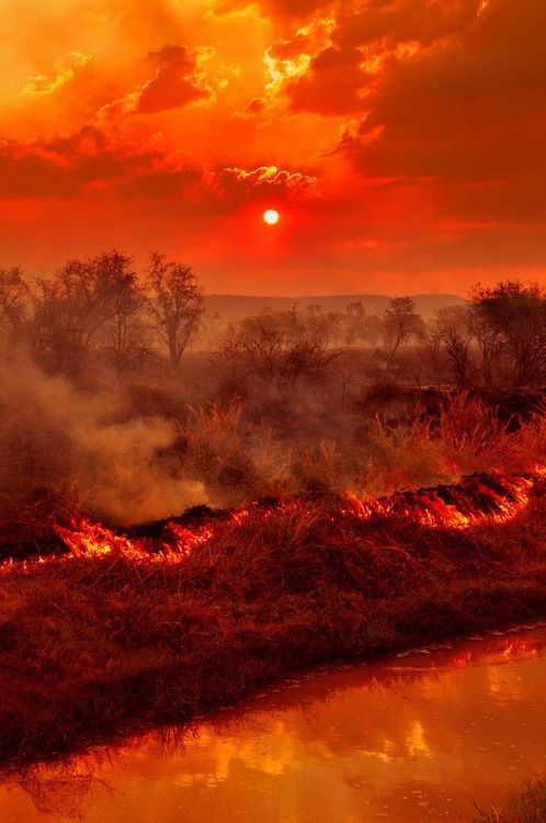 Result of Australian bush fires