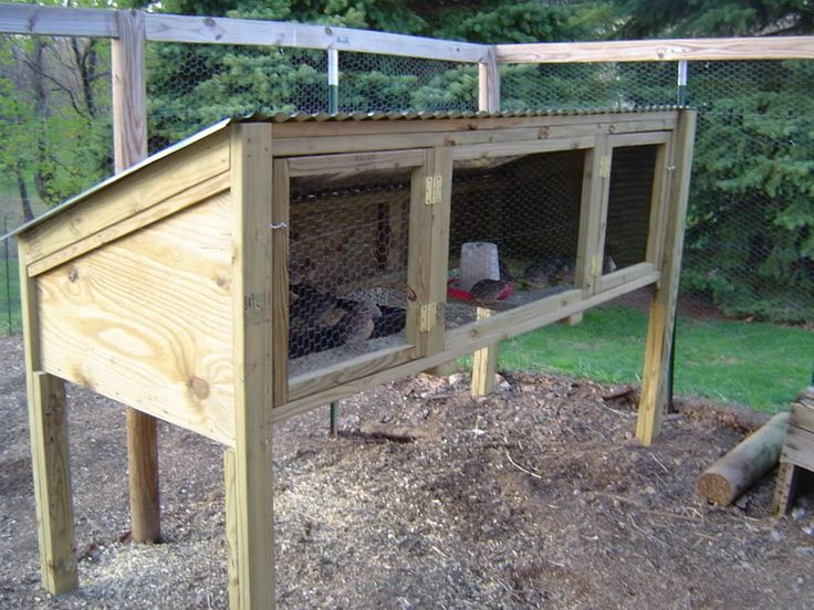 25 best ideas about quail coop on pinterest quail for Small backyard chicken coop plans free