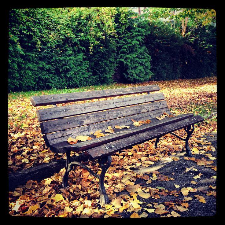 Autumn foliage in Mugello