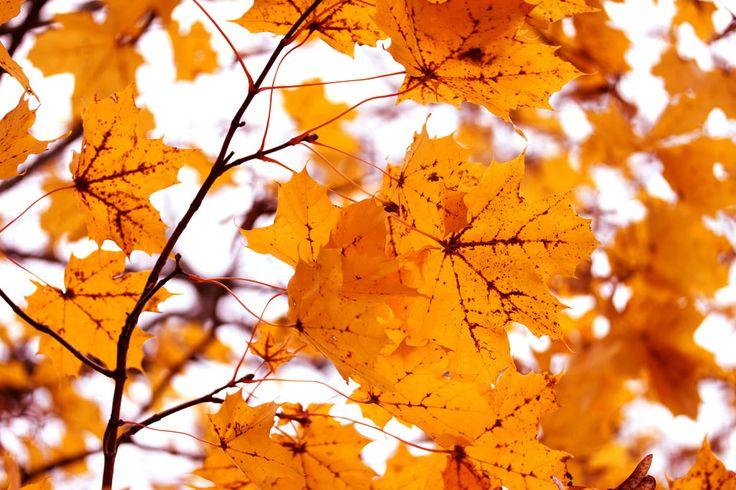 Autumn | by Siniirr