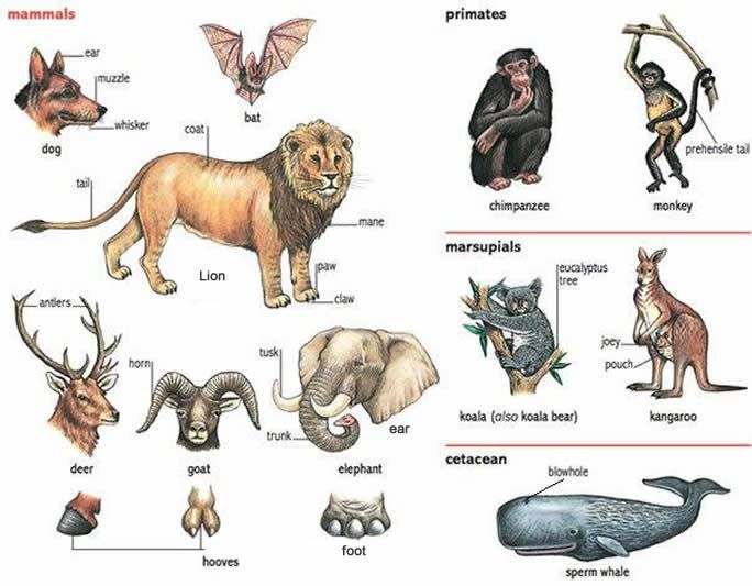 learning about animals and what their names and various parts are