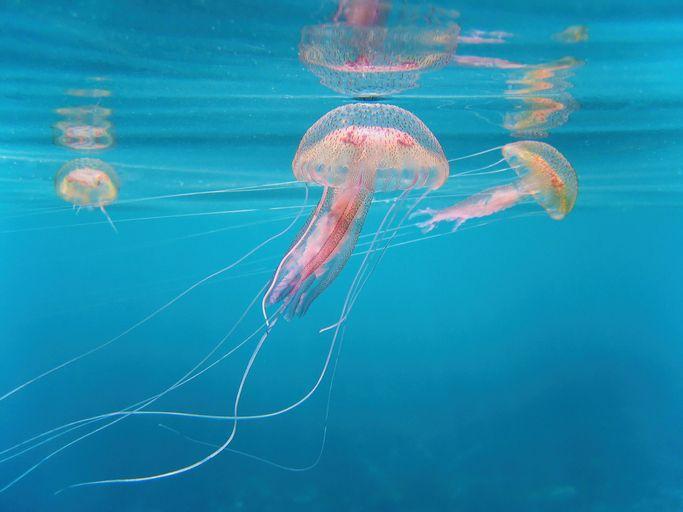 Piqûre de méduse : comment soulager la douleur au naturel ?