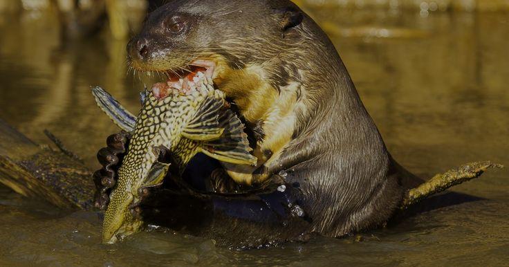 Fotógrafo registra riqueza da fauna e flora do Pantanal Norte (MT)