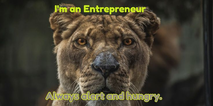Always alert and hungry. / I'm an Entrepreneur