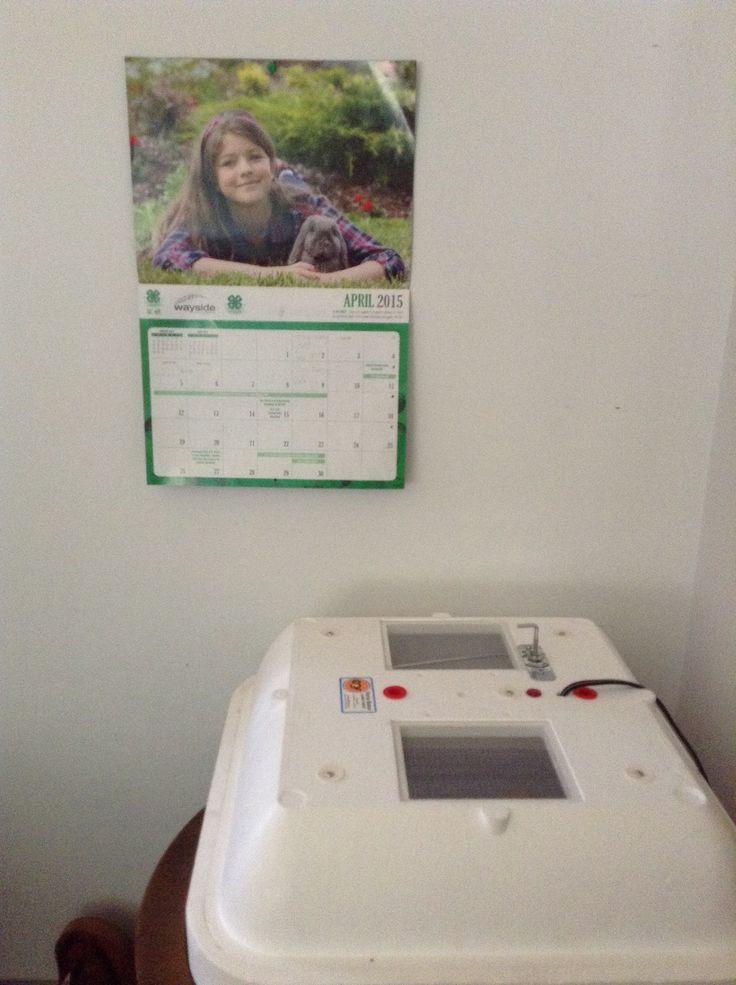My incubator and calendar