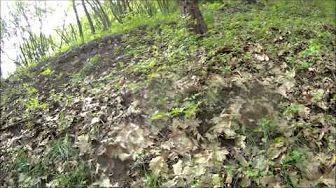 Léčivé rostliny (Medicinal plants) - Video herbář 121 rostlin - YouTube