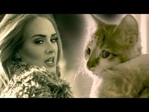 This #Adele Parody With #Kittens Will Make You Want to Adopt a New Furry Friend http://ibeebz.com
