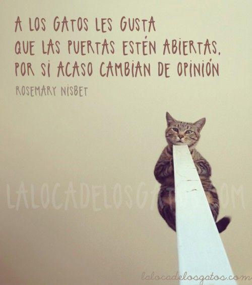 Citas de gatos: A los gatos les gustan las puertas abiertas.... | La Loca de los Gatos