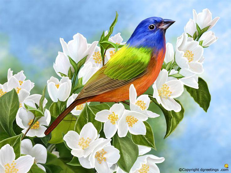 Get a huge range of Birds wallpapers here.