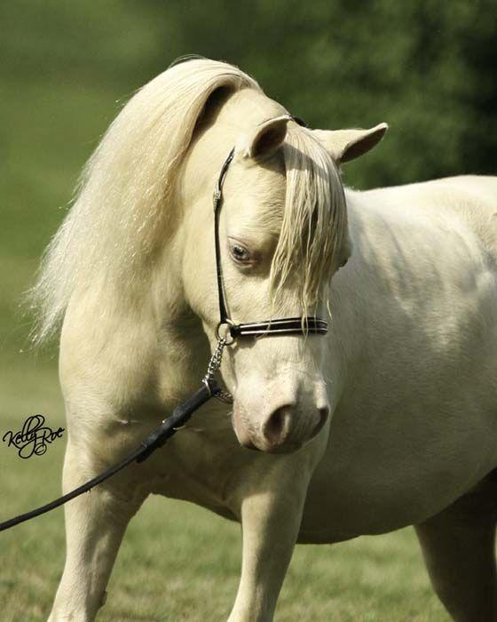 The  Best Arabian Horse Price Ideas On   Horse