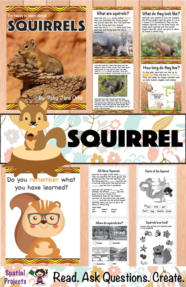Check Out This All About Squirrels Nonfiction Unit For Your 1st 2nd Or 3rd Grade Students You Will Get A Bo Squirrel Literacy Center Activity Writing Crafts [ 1136 x 736 Pixel ]