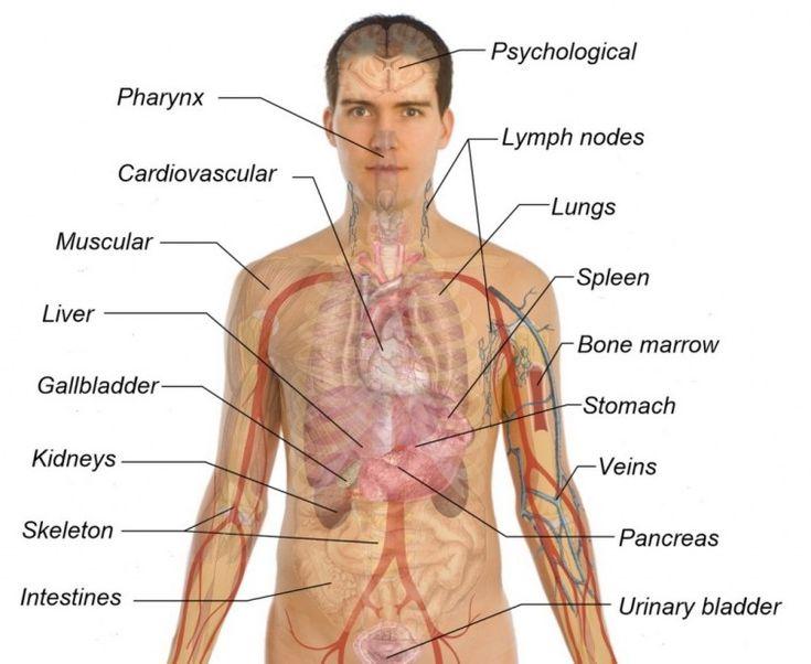 prostata massage darmstadt