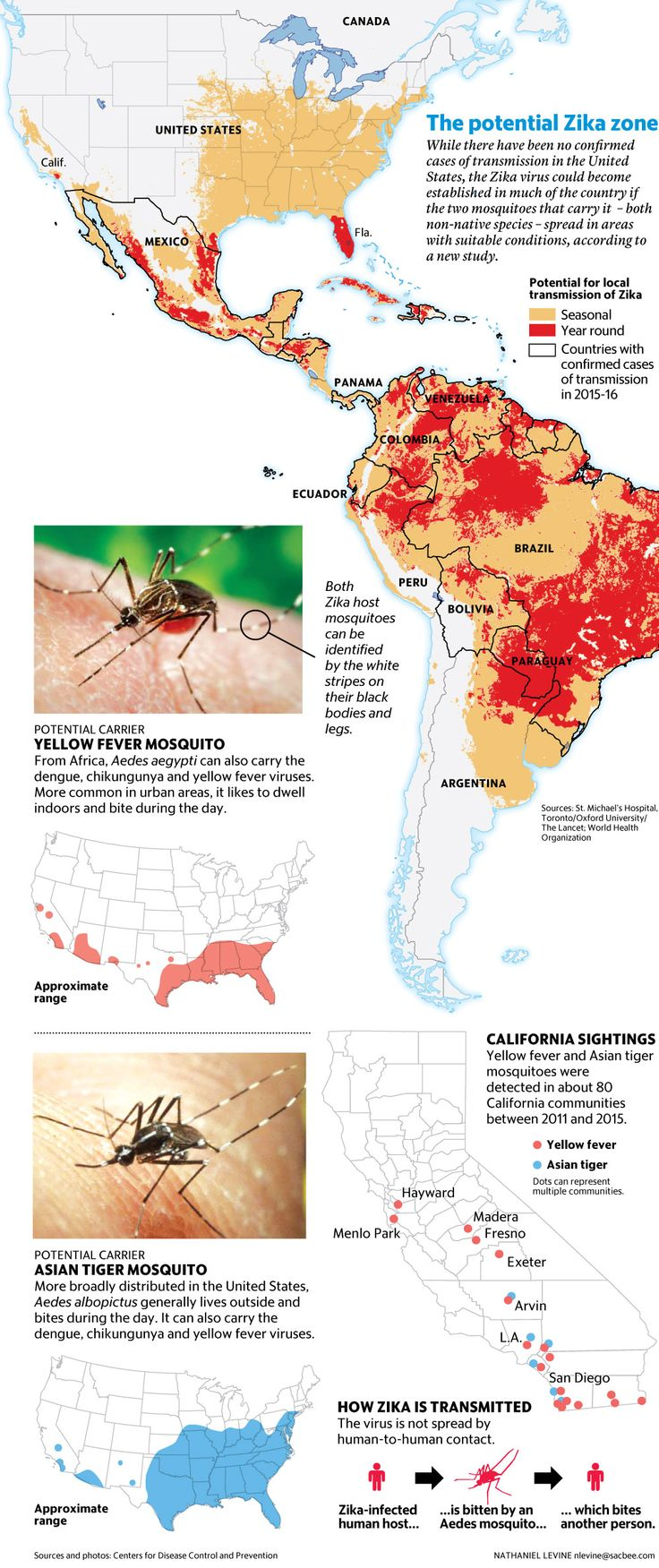 Graphic of potential for zika virus spread