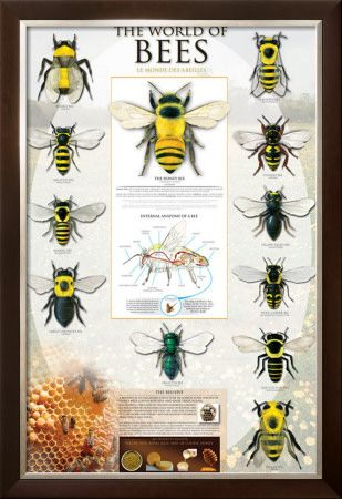 The World Of Bees Prints at AllPosters.com