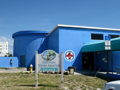 "Clearwater, FL. marine aquarium where "" Dolphin Tale"" was filmed & we got to meet ""Winter"" :O)Someday Work, Aquariums Florida, Aquariums Clearwater, Travel, Places, Marines Aquariums, Volunteers Work, Fl Marines, Clearwater Marines Winter"