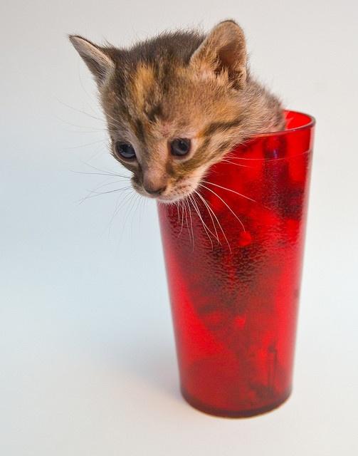cat in a cup...precious