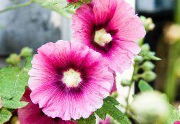 Home&Garden geeft je in het tijdschrift en online inspiratie voor huis en tuin!