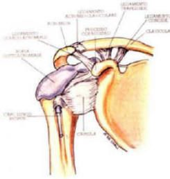 Dolore cronico alla spalla