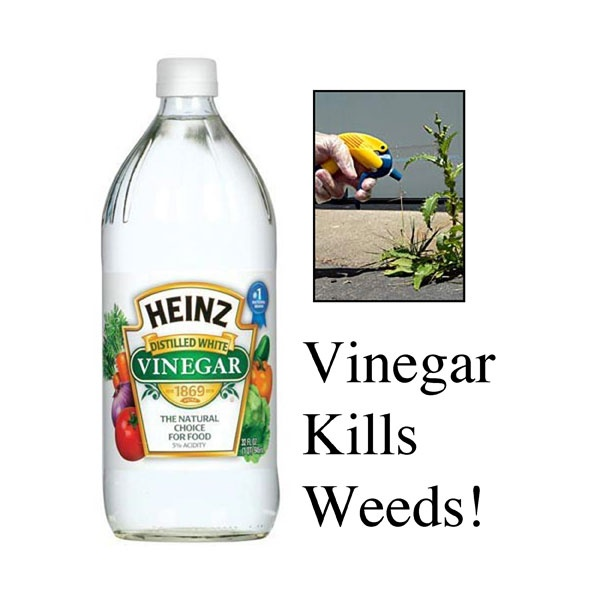 216 best images about garden diy on pinterest gardens bird feeders and plant markers for Vinegar in the garden