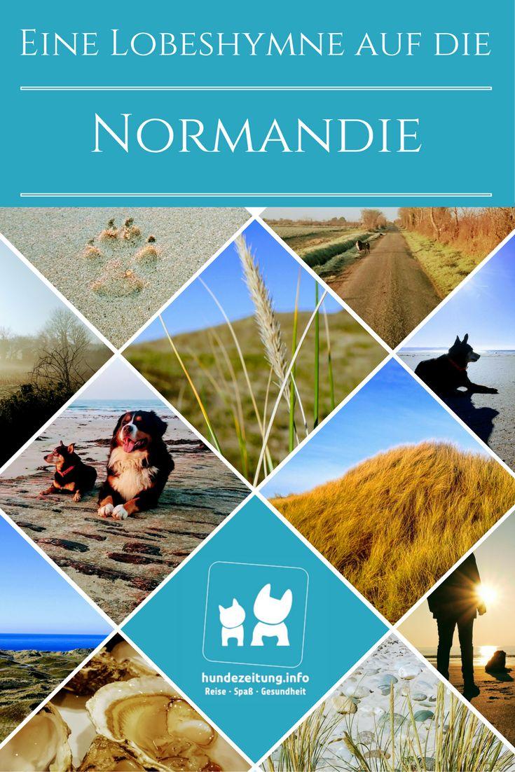 Warum die Normandie der perfekte Ort für Urlaub mit Hund ist