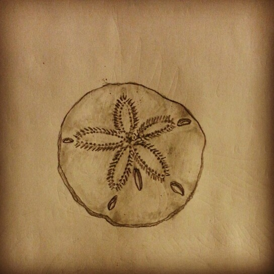 Gallery sand dollar sketch for Seashell tattoo meaning