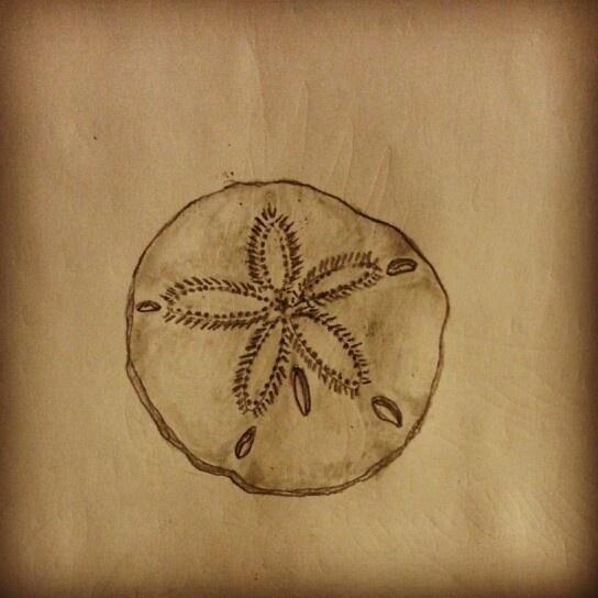 Sand Dollar tattoo sketch by - Ranz