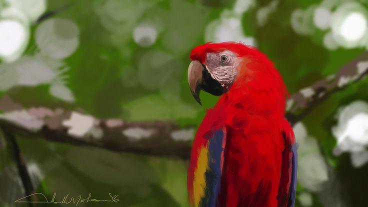 Bird study:illustration, Ashith Mohan on ArtStation at https://www.artstation.com/artwork/Jz4vn