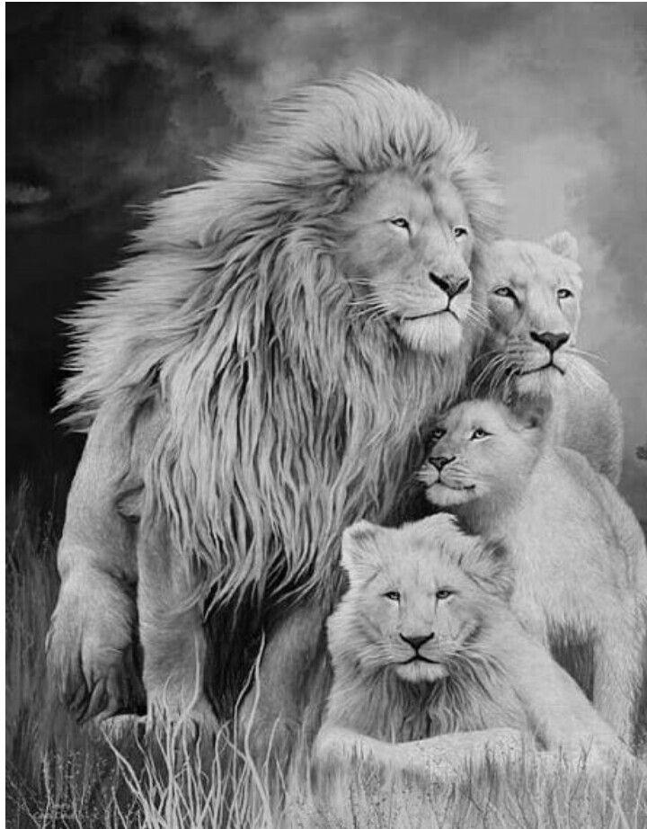 Открытки львицы