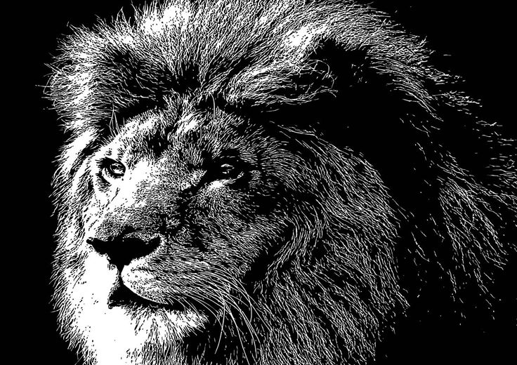 11 The Lion King By Chris McCabe - DRAGAN GRAFIX, Stylish Vector Wall Art Posters That You Can Buy In High Resolution PDF Format And Print Any Size You Wish. Decorate Your Walls With Original Art. Only R350 Per Design. Many Designs To Choose From. I Also Create Custom Designed Vector Wall Art. For More Information Call Chris McCabe On 082 482 0076 OR Email chris@dragangrafix.co.za