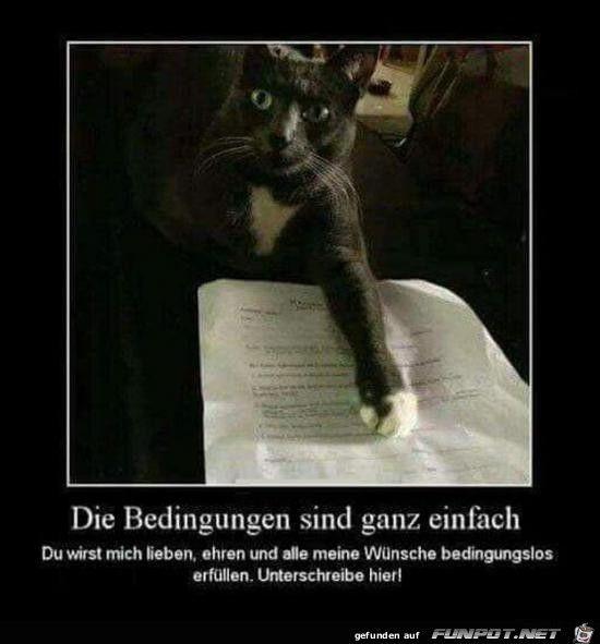 lustiges Bild 'hier unterschreib........jpg' von Edith. Eine von 14329 Dateien in der Kategorie 'witzige Bilder' auf FUNPOT.