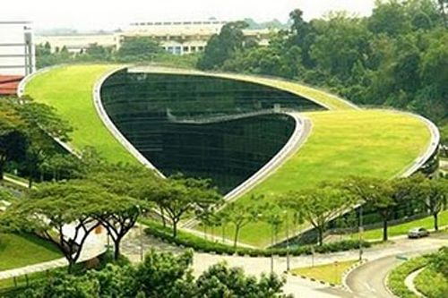 green roof architecture