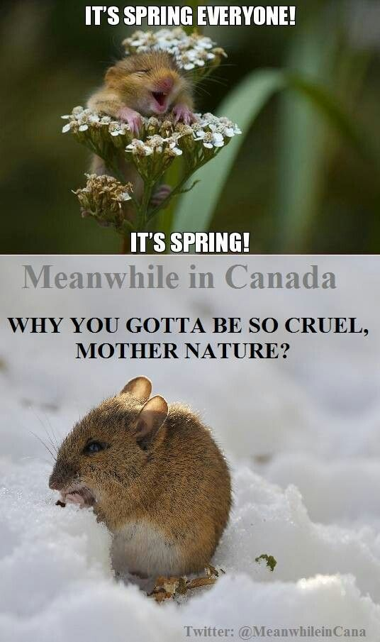 WHY YOU GOTTA TO BE SO CRUEL MOTHER NATURE?