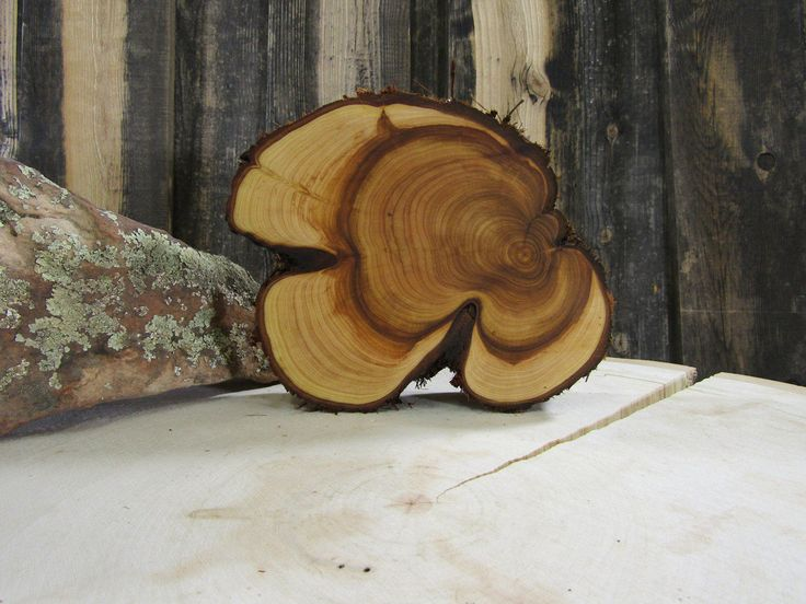Gorgeous Juniper Tree Slice Wall Hanging Candle Stand