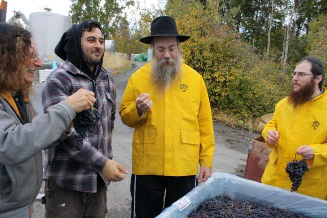 How Organic Kosher Wine Is Made