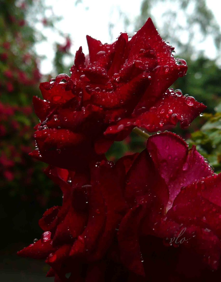 Refreshed by the morning rain: Special Things, Flowers Landscape, Long Time, Beautiful Flowers, Random Images, Luminous Spirit, Find Intresting