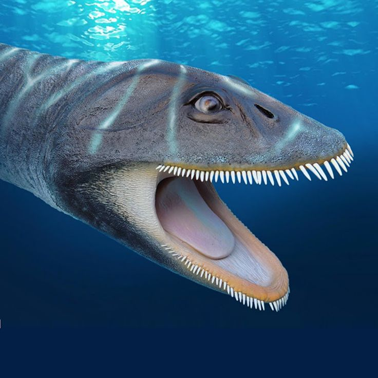 Antarctic Plesiosaur Filtered Food Like Modern Baleen Whales  http://www.sci-news.com/paleontology/antarctic-plesiosaur-morturneria-seymourensis-05191.h... - Sci-News.com - Google+