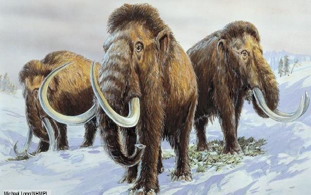 Wooly Mammoth-Extinct Animals That Science Could Bring Back From The de@d