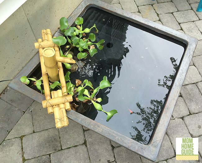 Giveaway of Aquascape Patio pond! Low entries! Put on your patio, fill and enjoy!