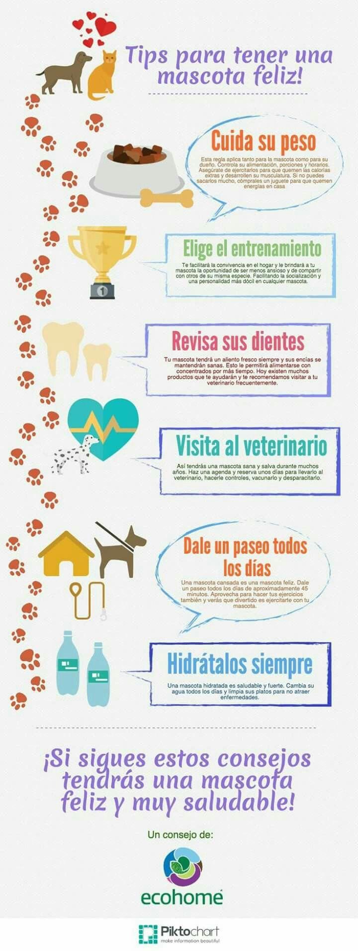 Para tu perro!❤