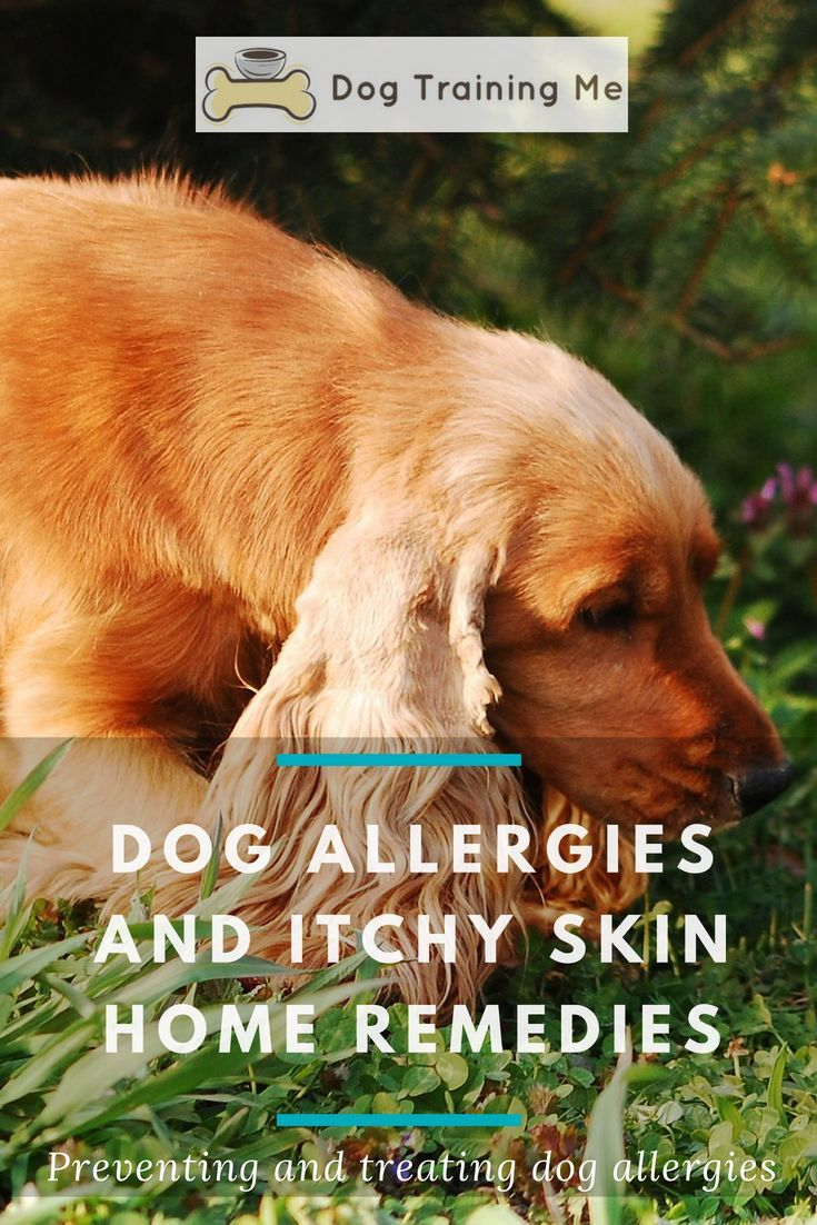 Dog Allergies Itchy Skin Home Remedies Dog Allergies Dog