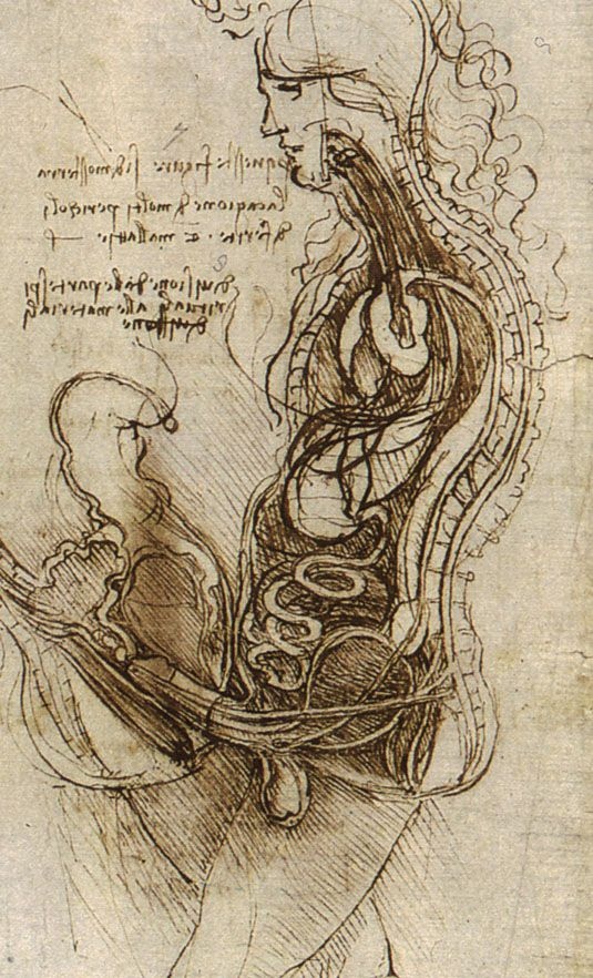 231 Best Leonardo Da Vinci Images On Pinterest Renaissance