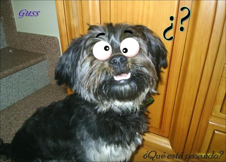 *Nuevo Juego*: Fotomontajes de nuestros perros | Cuidar de tu mascota es facilisimo.com