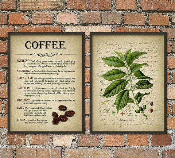 Coffee Wall Art Poster Set of 2 - Coffee Types Antique Coffee Plant - Breakast Bar or Cafe Decor - Coffee Giclee Home Decor Art Print Set
