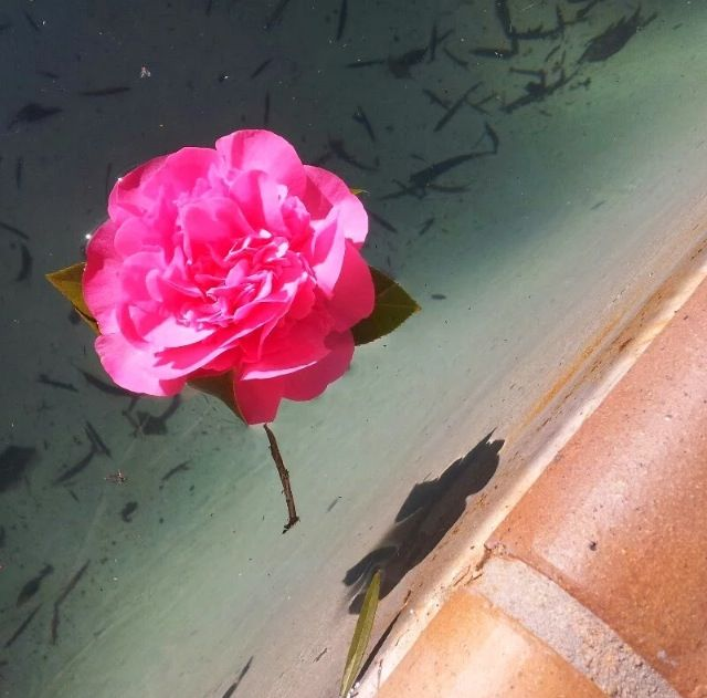 Lovely photo I took, but I wish I cleaned the pool first ;)