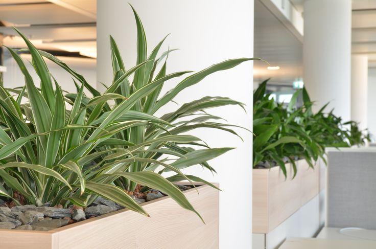 Ber ideen zu hydrokultur auf pinterest aquaponik for Zimmerpflanzen hydrokultur